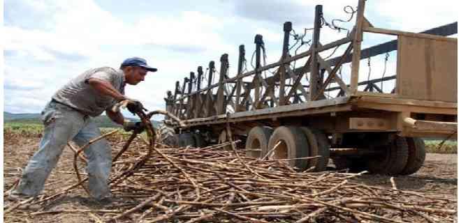 Cañicultores piden ajustes al precio del azúcar