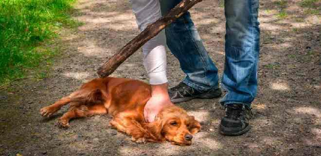 MP imputa a sujeto por maltrato animal y resistencia a la autoridad