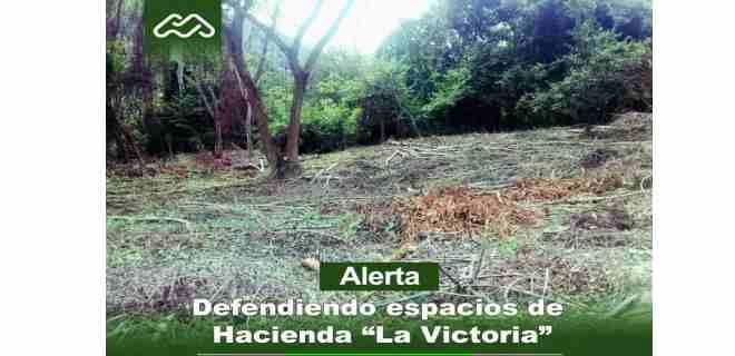 Autoridades de Cormetur denuncian tala en hacienda La Victoria